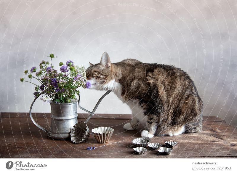 Stilleben mit der Katze backförmchen Pflanze Blume Blüte Wildpflanze Tier Haustier 1 Gießkanne Vase Behälter u. Gefäße Holz Metall beobachten Duft entdecken