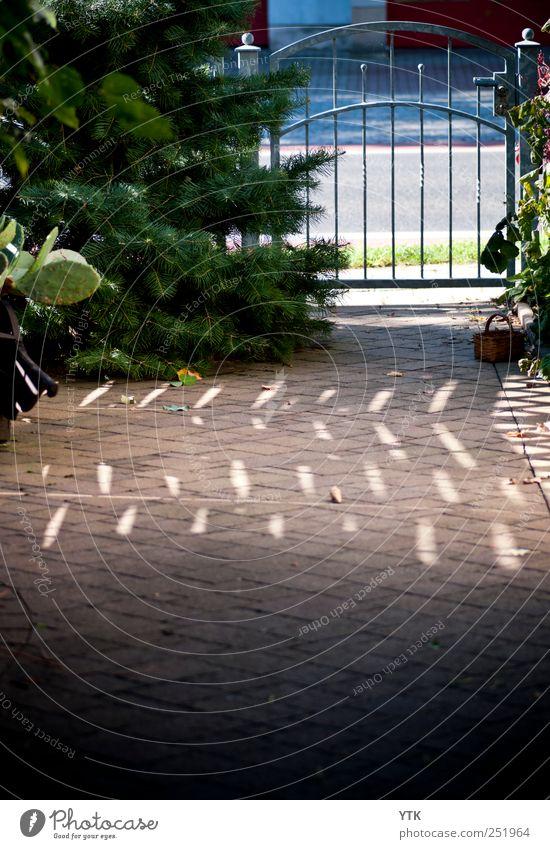 Welcome Home Umwelt Natur Pflanze Sonne Sonnenlicht Schönes Wetter Baum Grünpflanze Gefühle Vorfreude Sicherheit Schutz Geborgenheit Warmherzigkeit Tor