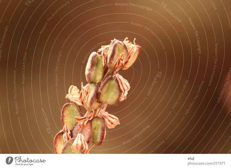 Braunzeug Natur grün Pflanze rot ruhig Tier braun trist trocken Samen beige Umarmen dehydrieren Wildpflanze Zecke