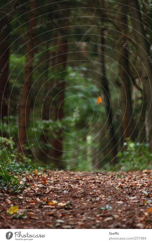 Herbstblatt fällt auf dem Waldboden Herbstwald Fußweg Herbstlandschaft Einsamkeit Traurigkeit Herbstbeginn fallende Blätter Herbstlaub Nostalgie ruhig
