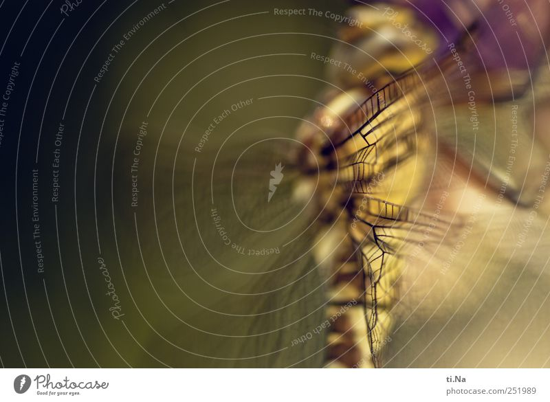 Gemälde schön Garten Zufriedenheit warten Wildtier Flügel Libelle