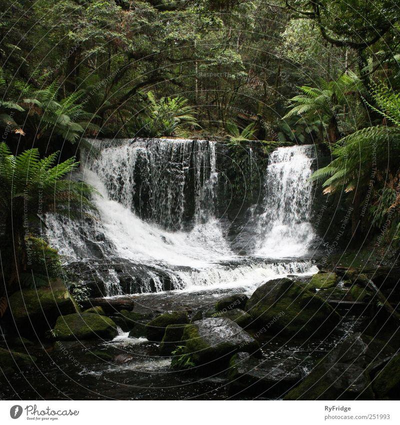 Wasserfall im Regenwald Natur Pflanze Klima Baum Gras Sträucher Moos Urwald Felsen Fluss ästhetisch schön natürlich Gelassenheit Erholung Gedeckte Farben