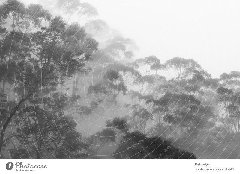 Natur Baum Pflanze Erholung grau Wetter Nebel Urwald