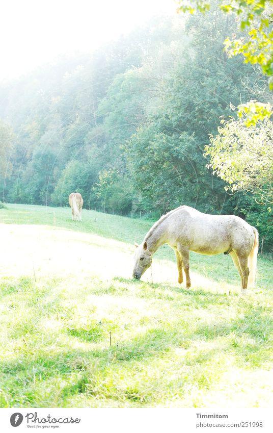 [CHAMANSÜLZ 2011] - Zauberwelt Natur grün schön Pflanze ruhig Tier gelb Wiese Umwelt Landschaft Gefühle Stimmung hell Zufriedenheit Freizeit & Hobby Ausflug