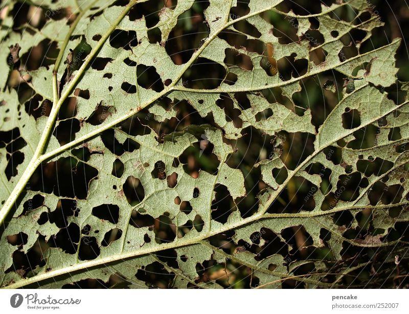 loch an loch Natur Pflanze Herbst Blatt Ornament Fährte bizarr Überleben Zusammenhalt Loch Fraßspur Lochmuster Farbfoto Außenaufnahme Nahaufnahme Detailaufnahme
