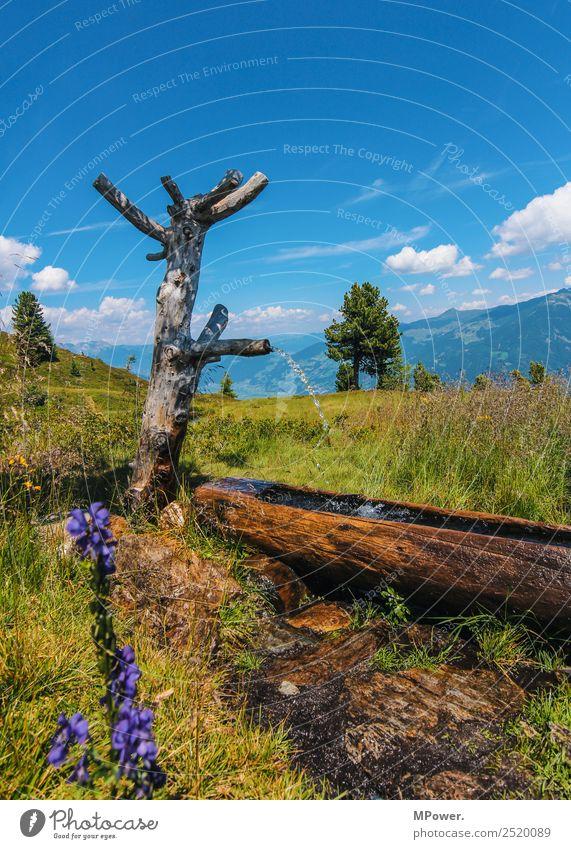 jungbrunnen Umwelt Natur Landschaft Pflanze Tier Schönes Wetter Wiese Feld Alpen Berge u. Gebirge schön wandern Wasserstelle Quelle Erfrischung Baum