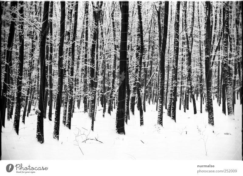 kontrast im winter Natur weiß Baum Pflanze Winter Tier Wald kalt dunkel Schnee träumen Stimmung Kunst Eis glänzend ästhetisch