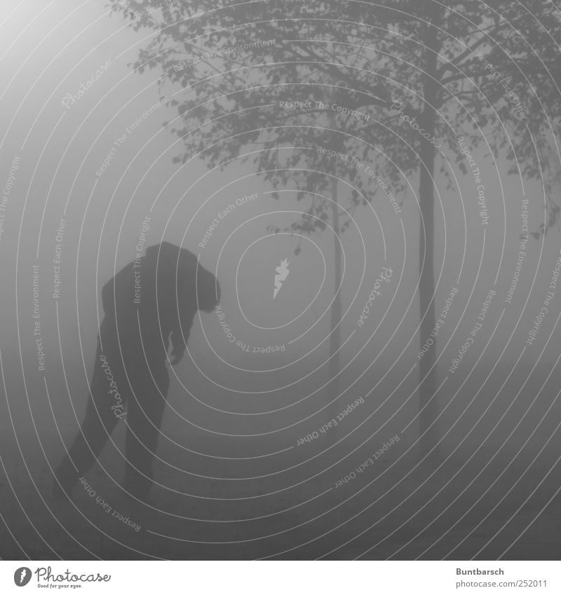 außer der Norm und allein Mann Erwachsene 1 Mensch Nebel Baum stehen Traurigkeit bedrohlich dunkel gruselig hässlich trist grau Trauer Schmerz Sehnsucht