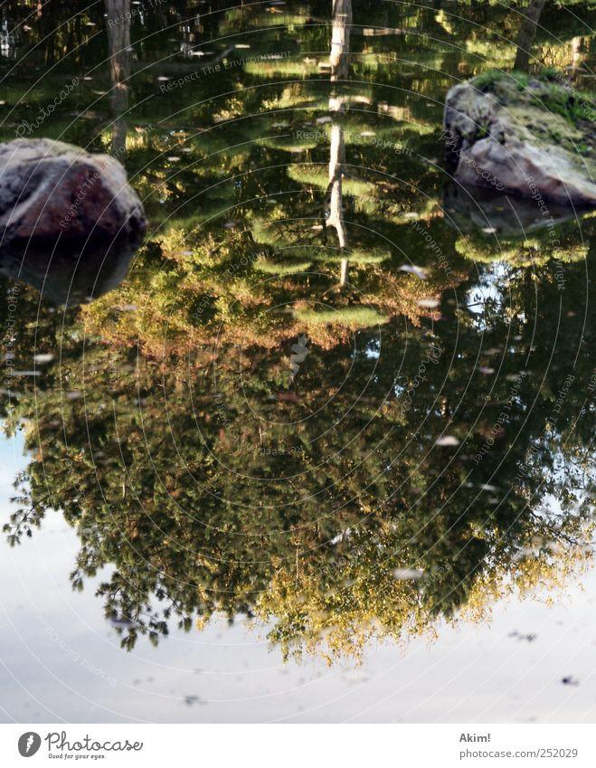 Mirrorlake - Japanischer Garten grün schön Wasser Baum Landschaft ruhig gelb Gefühle Herbst Garten See Stein Felsen Park Zufriedenheit ästhetisch