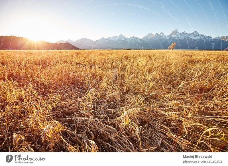 Natur Ferien & Urlaub & Reisen schön Sonne Landschaft ruhig Ferne Berge u. Gebirge Herbst Wiese Tourismus Freiheit Stimmung Ausflug wandern gold