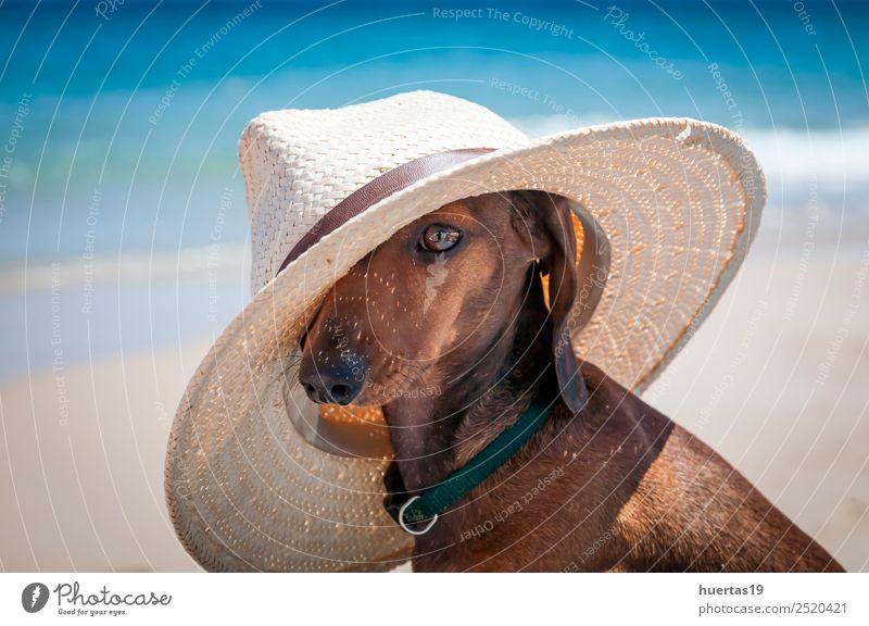 Halsband Hund mit Hut schön Ferien & Urlaub & Reisen Sommer Sonne Strand Freundschaft Tier Schönes Wetter Meer Wasserfahrzeug Sonnenbrille Haustier 1
