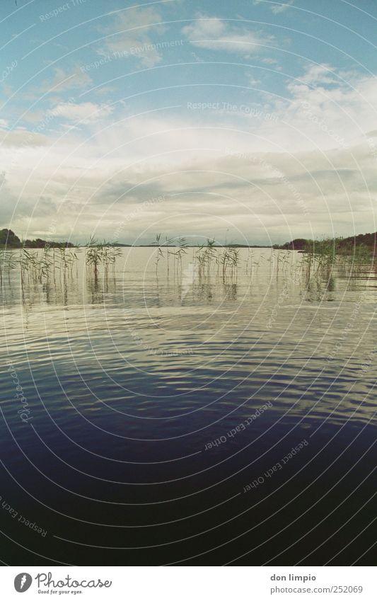 lough mask Ferne Insel Wellen Natur Wasser Wolken Pflanze Seeufer Republik Irland Menschenleer blau Stimmung ruhig Horizont Idylle Schilfrohr analog Mitte