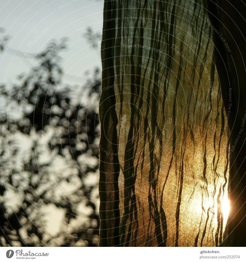 herbstgrün Baum Herbst Garten Stimmung gold Warmherzigkeit Schal Sonnenlicht