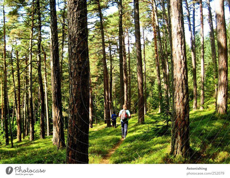 Wanderung im Wald Mensch maskulin 2 Umwelt Natur Landschaft Pflanze Erde Sommer Wetter Schönes Wetter Baum Gras Sträucher Moos gehen hoch grün Wege & Pfade