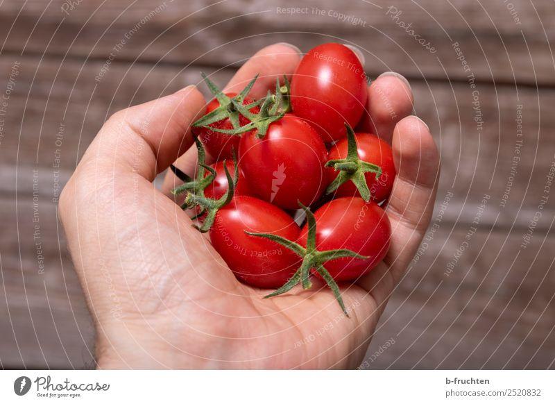 Datteltomaten Gemüse Bioprodukte Vegetarische Ernährung Gesunde Ernährung Mann Erwachsene Arme Finger festhalten frisch Gesundheit rot Tomate datteltomate