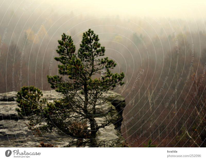 Nebelwald Natur Ferien & Urlaub & Reisen Pflanze grün Baum Landschaft Ferne Berge u. Gebirge Herbst grau braun Felsen Tourismus Nebel Ausflug Abenteuer