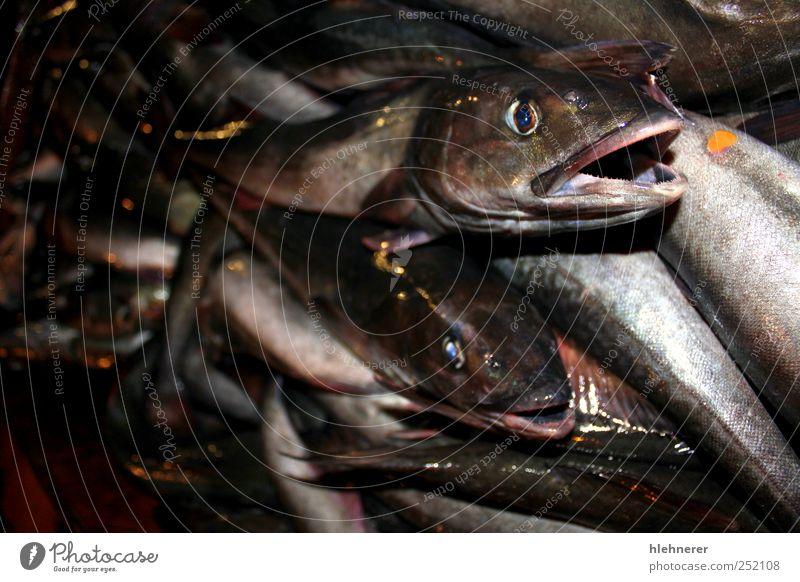 Fischfang Lebensmittel Meeresfrüchte Mittagessen Abendessen Angeln Industrie Natur Tier frisch groß Tod fangen Flosse Silber Markt roh Gesundheit Kopf Auge