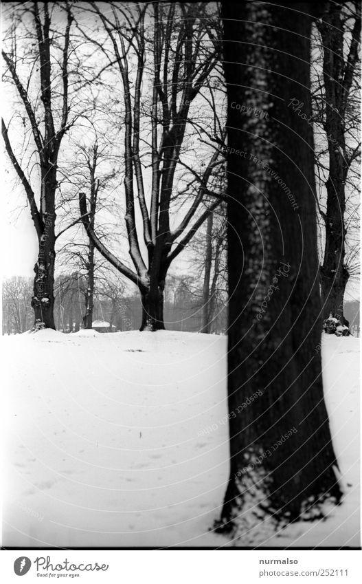 Kontrast im Park Natur alt weiß Baum Pflanze Winter Tier schwarz kalt dunkel Schnee Umwelt Landschaft Stimmung Kunst