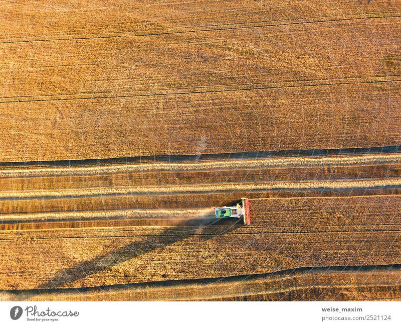 Erntemaschine, die im Feld arbeitet. Kombinierte Maschine Sommer Arbeit & Erwerbstätigkeit Industrie Business Natur Landschaft Pflanze Erde Sand Sonnenaufgang