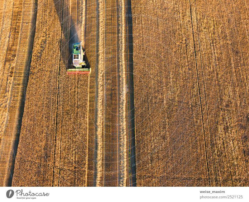 Mähdrescher Maschinenernte Landwirtschaft Weizenfeld Ferne Sommer Arbeit & Erwerbstätigkeit Industrie Business Pflanze Sonnenaufgang Sonnenuntergang Herbst