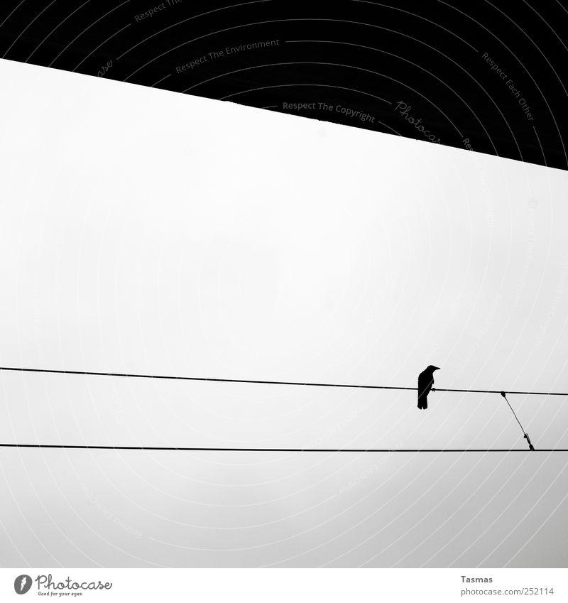 Vogelperspektive Tier dunkel schwarz kalt grau Vogel Verkehr Wildtier ästhetisch beobachten Eisenbahn Wachsamkeit Kontrolle Bahnhof Krallen Überwachung