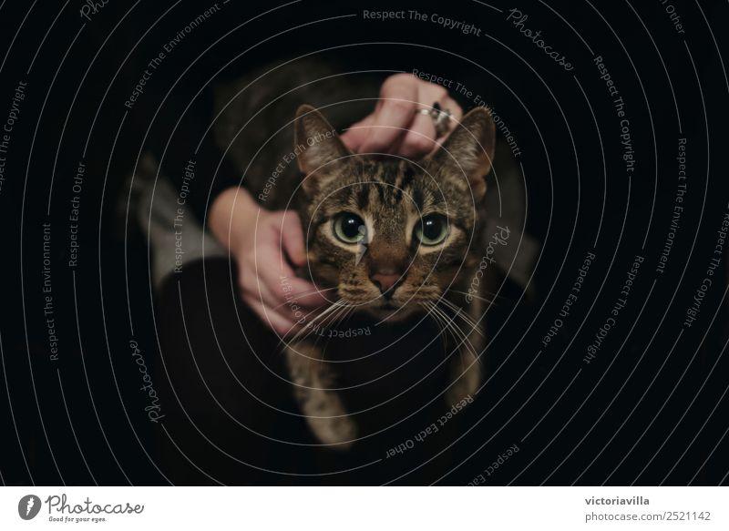 Bestes Selbstporträt Hand 1 Mensch Tier Haustier Katze dunkel schwarz schwarzer Hintergrund Geheimnis Farbfoto Innenaufnahme Menschenleer Hintergrund neutral