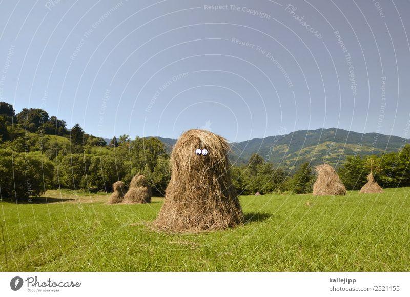 trump tower Mensch Kultur Umwelt Natur Landschaft Pflanze Tier Wolkenloser Himmel Klima Wiese Feld einzigartig blau Heu Stroh dumm Dummkopf strohkopf