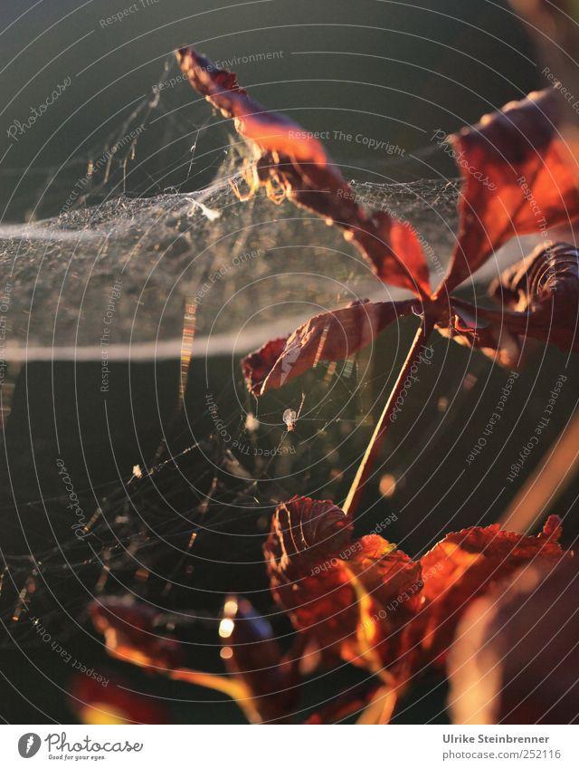 Herbstgespinst Natur Baum Pflanze Blatt Herbst Umwelt Garten braun natürlich Netzwerk einfach Netz leuchten Vergänglichkeit Ast Stengel