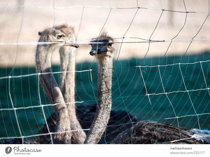 Drei blau ruhig Tier Stimmung braun Zufriedenheit Vogel Zusammensein natürlich Team Tiergesicht Neugier beobachten Landwirtschaft Gelassenheit Zaun