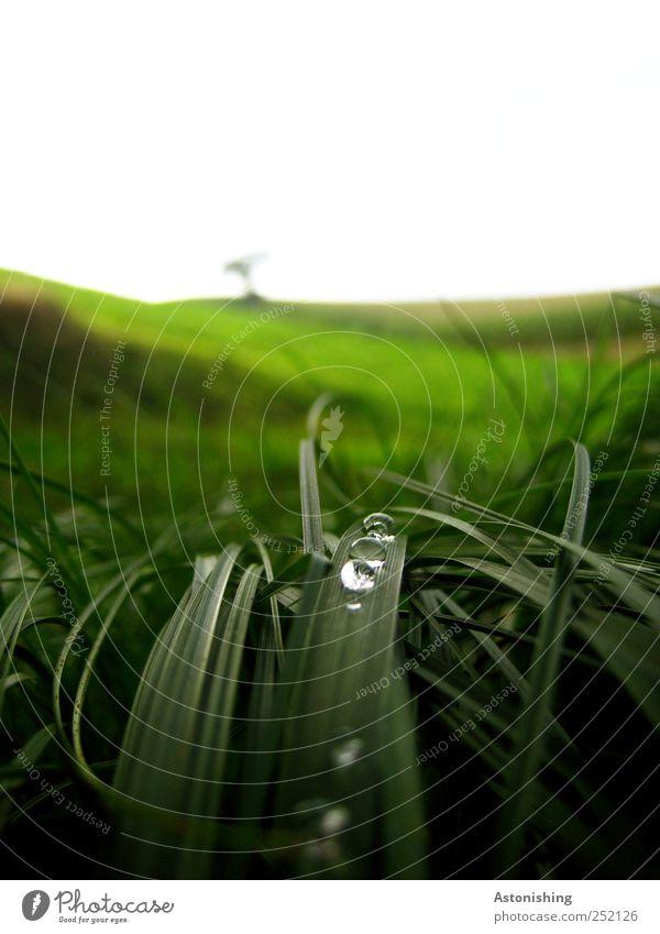 Drops Himmel Natur Wasser Baum Pflanze Sommer Blatt kalt Wiese Umwelt Landschaft Gras Regen Wetter Horizont nass