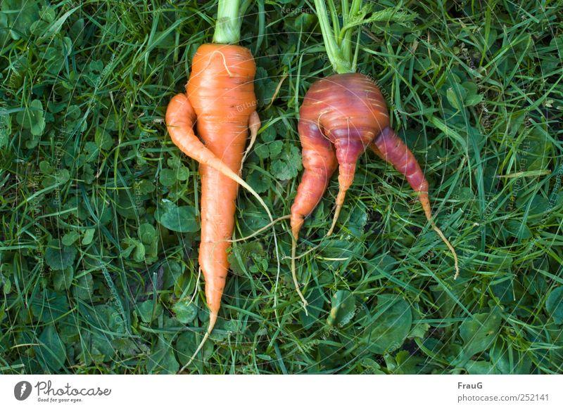 verschränkt und gespreizt Gemüse Möhren Bioprodukte Vegetarische Ernährung Natur Pflanze Gras Nutzpflanze Wiese liegen lecker natürlich Farbe skurril Farbfoto