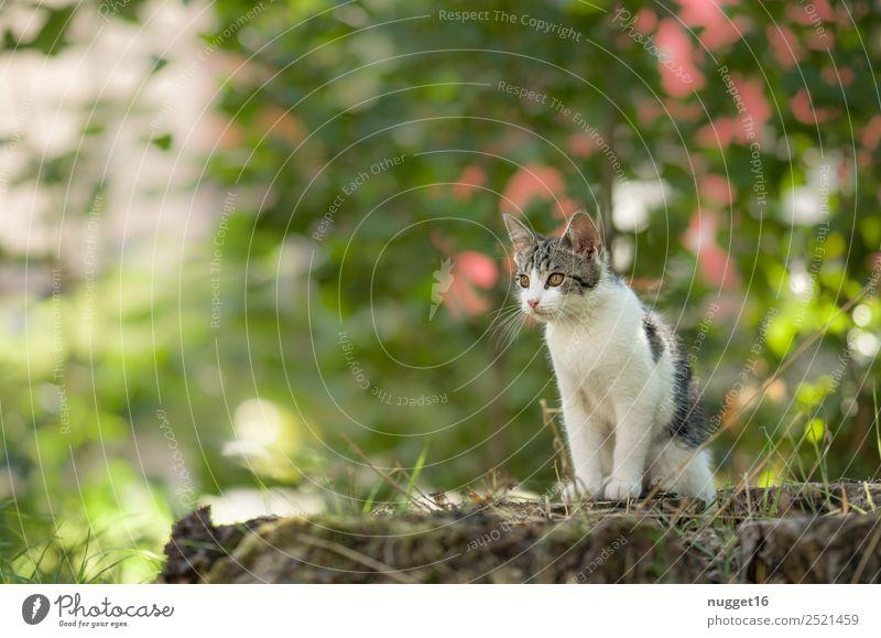 junge Katze Umwelt Natur Pflanze Tier Frühling Sommer Herbst Klima Schönes Wetter Gras Sträucher Garten Park Wald Haustier Tiergesicht Fell Krallen Pfote 1