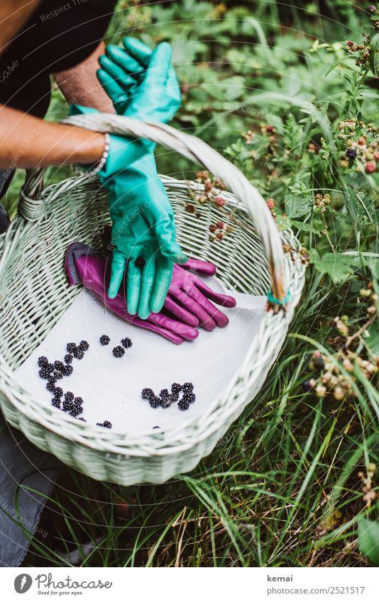 Eröffnet: Brombeerjagdsaison Frucht Brombeeren Ernährung Bioprodukte Vegetarische Ernährung Korb Lifestyle Leben Wohlgefühl Zufriedenheit Freizeit & Hobby