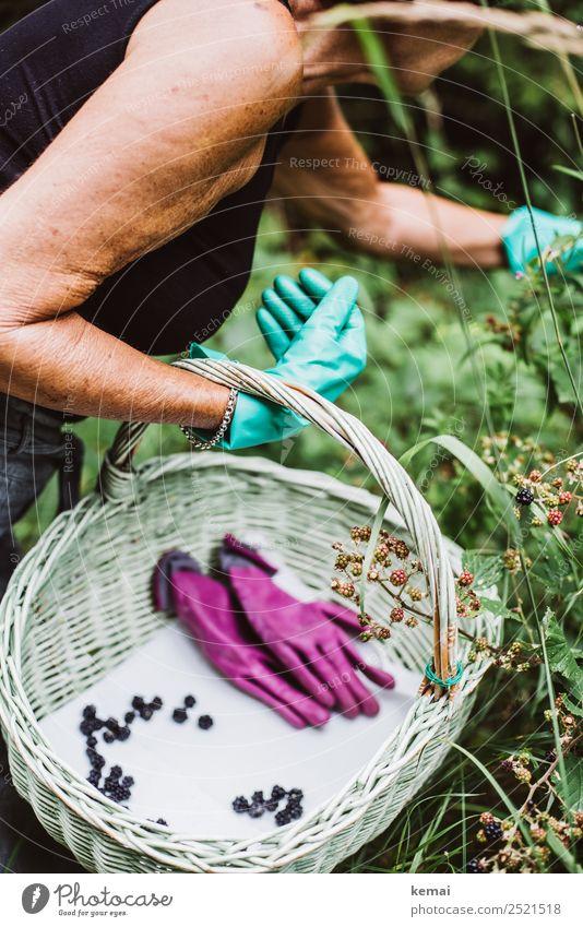 Beeren pflücken Frau Mensch Natur Gesunde Ernährung Sommer ruhig Lifestyle Leben feminin Lebensmittel Arbeit & Erwerbstätigkeit Ausflug Frucht Freizeit & Hobby