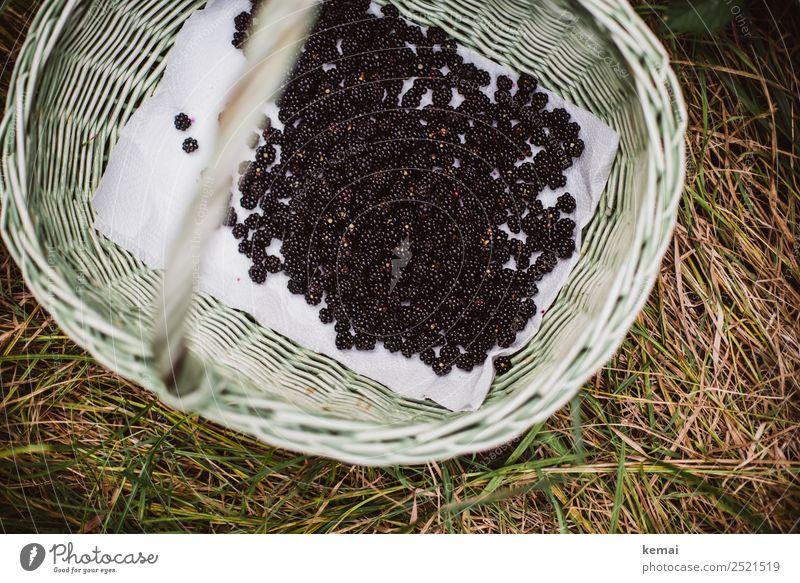 Brombeerernte Frucht Beeren Brombeeren Ernährung Bioprodukte Vegetarische Ernährung Diät Slowfood Korb Lifestyle Gesundheit Gesunde Ernährung harmonisch
