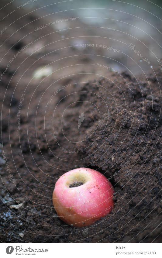 [CHAMANSÜLZ] Apfel-Kaffee-Kompost Natur rot Ernährung Umwelt Garten braun Erde Frucht natürlich Kaffee Wandel & Veränderung rund Vergänglichkeit verfaulen Apfel Landwirtschaft