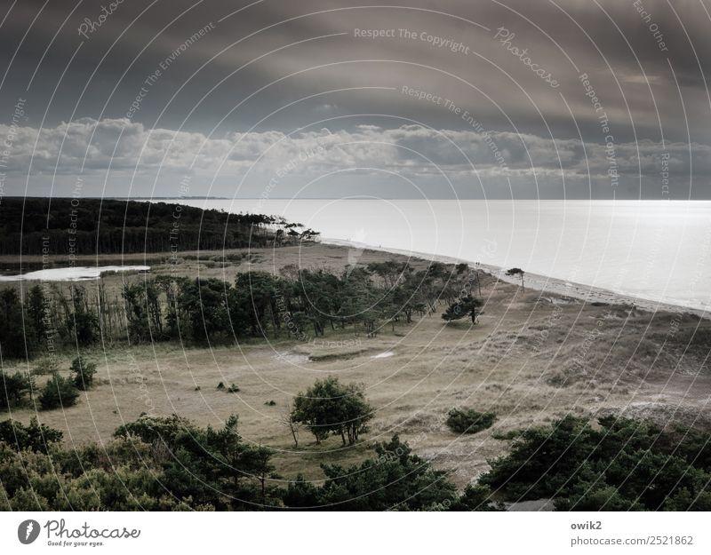 Wild, weit und windig Ferne Umwelt Natur Landschaft Pflanze Wasser Himmel Wolken Horizont Herbst Schönes Wetter Wind Baum Windflüchter Wald Küste Strand Ostsee