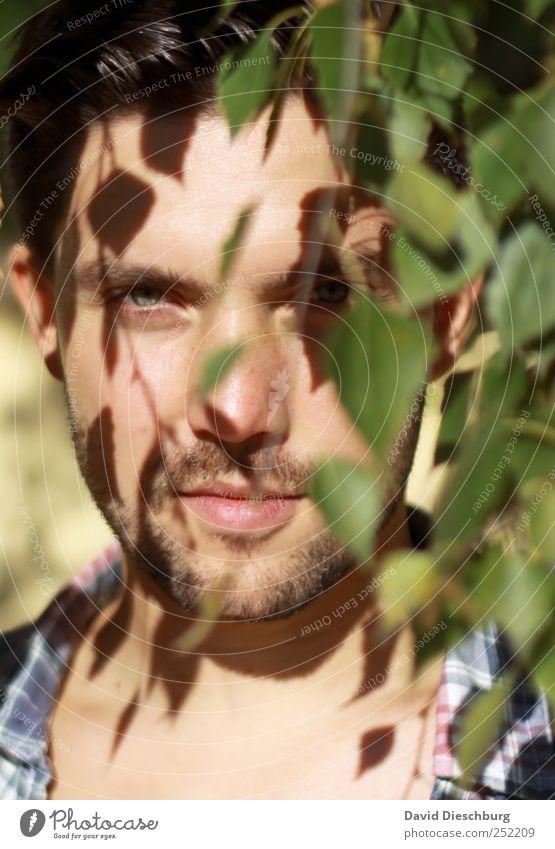 Herbstkollektion III Mensch Mann Jugendliche grün schön Baum Pflanze Sommer Blatt Erwachsene Gesicht Haare & Frisuren Kopf Junger Mann maskulin 18-30 Jahre