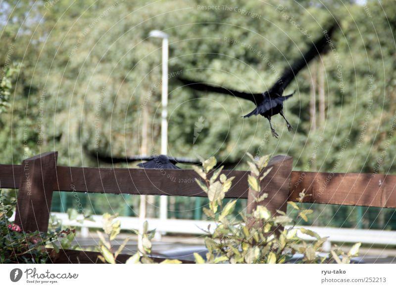 fly away Baum Tier Bewegung Stimmung Vogel Tierpaar fliegen Wildtier Sträucher Flügel Laterne Zaun gefangen hinten Schüchternheit Rabenvögel
