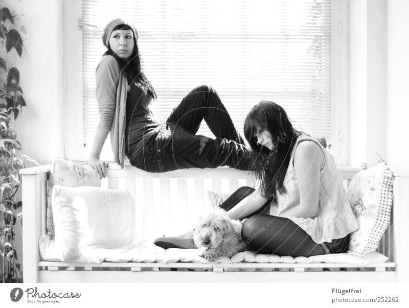 schöne Erinnerung Frau Mensch Jugendliche Pflanze ruhig Erholung feminin Erwachsene Denken Hund Familie & Verwandtschaft sitzen Autofenster Bank Warmherzigkeit Balkon