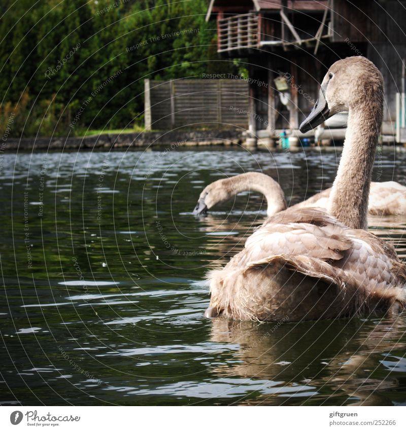 familienausflug Natur Wasser Baum Pflanze Tier Auge Umwelt grau Kopf See Vogel Tierjunges Schwimmen & Baden Wildtier Flügel Urelemente