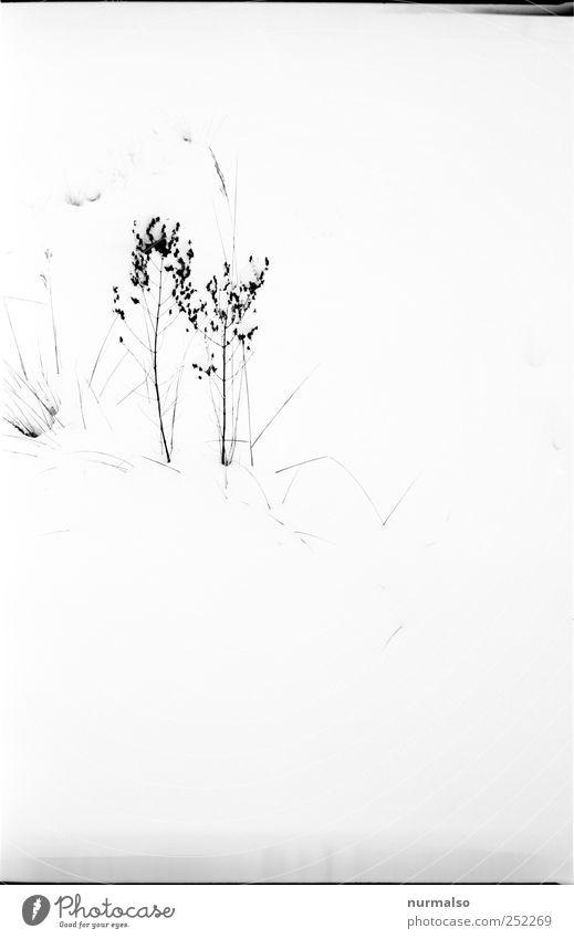 wenig ist mehr winter Natur ruhig Tier Erholung kalt Wiese Umwelt Gras Garten Stil Stimmung Kunst Freizeit & Hobby Eis elegant ästhetisch