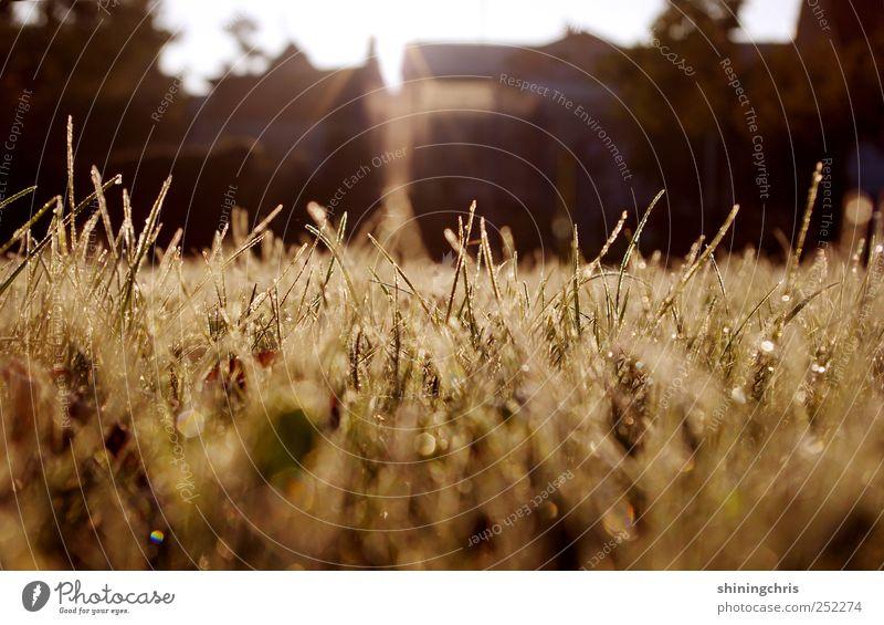 morgenstund' Natur Herbst Gras leuchten glänzend nass Stimmung Hoffnung Horizont stagnierend träumen Unendlichkeit aufwachen schimmern Tau Wassertropfen Rasen