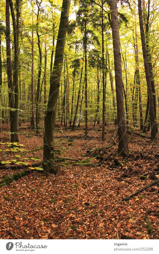 Streifzug durch die Natur Freizeit & Hobby Ausflug wandern Umwelt Landschaft Pflanze Erde Sommer Herbst Baum Gras Moos Blatt Wald genießen träumen Stimmung
