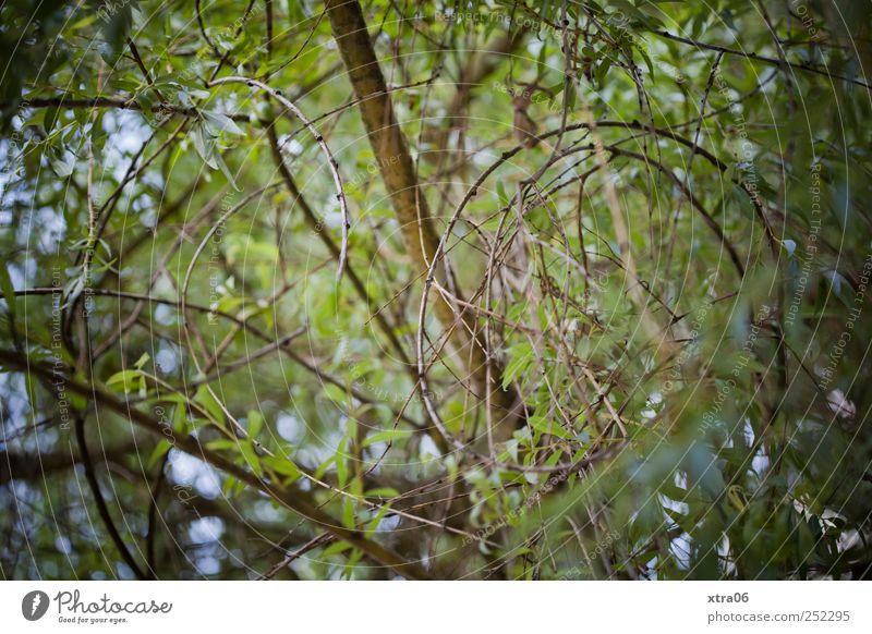 blick nach oben Natur grün Baum Pflanze Blatt Umwelt oben Ast Grünpflanze Windung Blätterdach