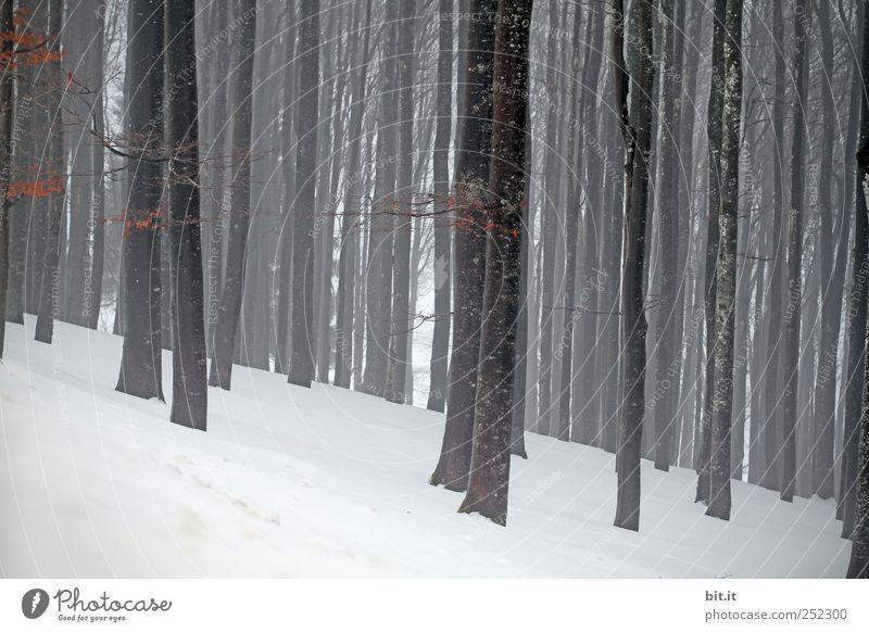 Kahl, kahl & kalt Umwelt Natur Landschaft Pflanze Winter Klima Wetter schlechtes Wetter Eis Frost Schnee Baum Wald grau schwarz weiß Einsamkeit Endzeitstimmung