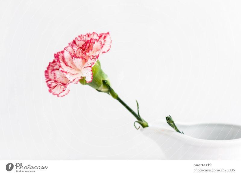 Spanische Blume Leben Dekoration & Verzierung Natur Blumenstrauß weiß Gefühle Liebe Romantik bunte Blumen rote Blumen gelbe Blumen rosa Blumen Farbfoto