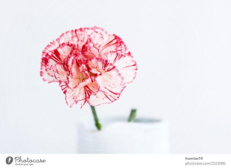 Blumenstrauß mit spanischen Blumen Leben Dekoration & Verzierung Natur Pflanze authentisch Freundlichkeit Fröhlichkeit weiß Gefühle Liebe bunte Blumen
