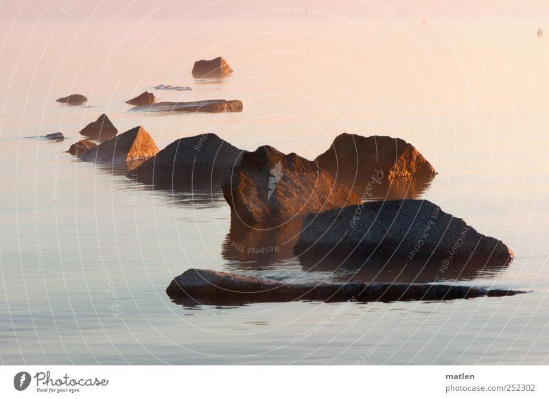 Herbstmorgen mit Ente Himmel Wasser blau Einsamkeit Tier kalt Landschaft braun rosa Felsen Nebel Schwimmen & Baden Insel Wildtier Bucht