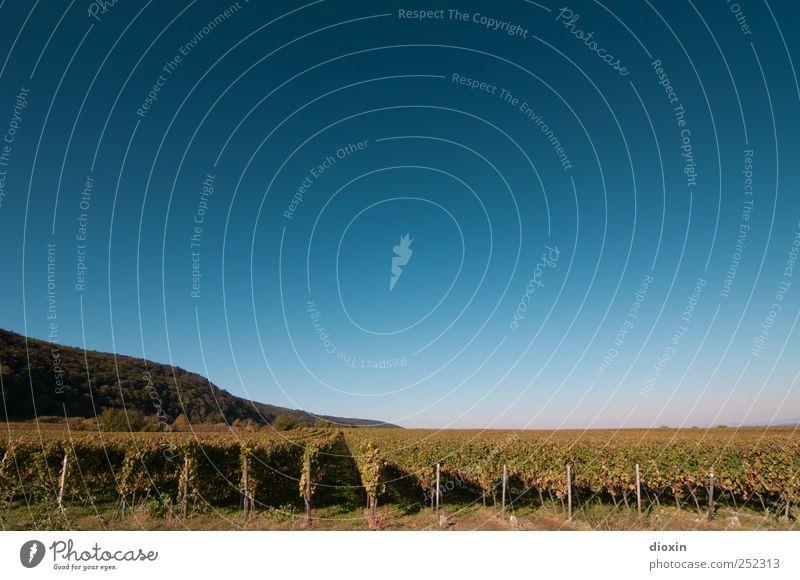 Weinland-Pfalz Ferien & Urlaub & Reisen Ausflug Ferne Landwirtschaft Forstwirtschaft Umwelt Natur Landschaft Himmel Wolkenloser Himmel Horizont Sonnenlicht